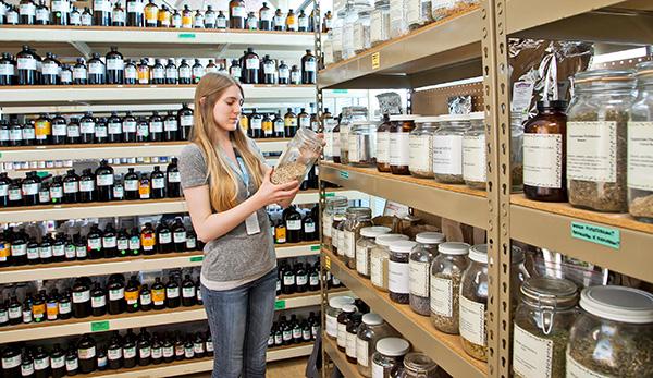 Bastyr Dispensary employee in bulk herb section.